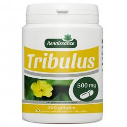 Tribulus Terrestris - 200 gélules à 500 mg